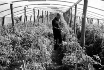 Кримінальну статтю «торгівля людьми» тернопільські правоохоронці інкримінують мешканці Шумщини та закарпатцю