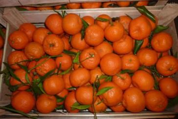 У переддень свята Миколая тернополянин поцупив ящик мандарин