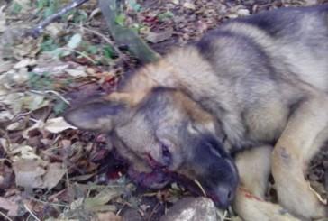 Правоохоронці з'ясовують обставини загибелі собаки