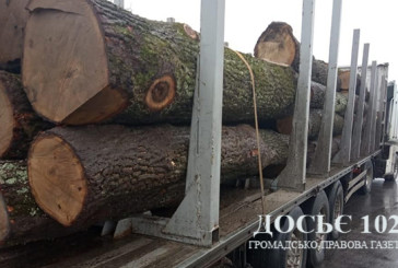 Поліцейські встановлюють законність та обставини порубки дерев на території Борщівської районної лікарні