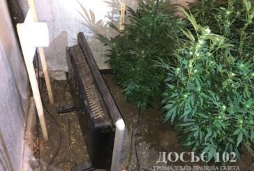 Правоохоронці Тернопільщини викрили конопляну теплицю в гаражі
