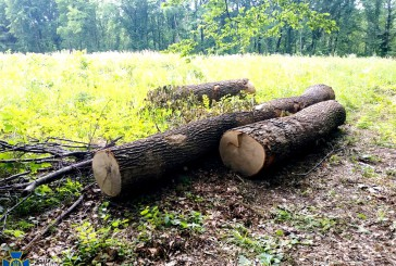 Учасникам групи, яких СБУ викрила на нелегальній вирубці державного лісу на майже мільйон гривень, повідомили про підозру