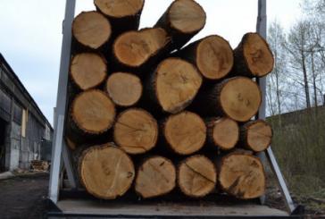 Підволочиські поліцейські встановили зловмисників, які зрізали дерева на чужому господарстві