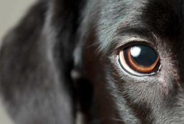 До кримінальної відповідальності притягнуть чоловіка, який застрелив безпритульну собаку