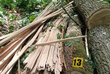 Завдяки вчасному повідомленню громадських активістів бучацькі поліцейські припинили незаконну порубку дерев