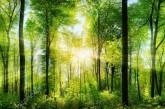 Шановні колеги! Від імені Тернопільського ОУЛМГ сердечно вітаю Вас з професійним святом – Днем працівника лісу!